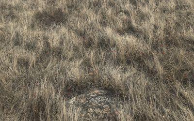 kikawînaw askiy wîscakasa – Mother Earth's Hair